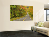 Roadway Through White Mountain National Forest, New Hampshire, USA Wall Mural by Adam Jones