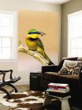 Little Bee-Eater Bird on Limb With Bee in Beak, Kenya Wall Mural by Joanne Williams