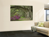 Oak Trees Above Azaleas in Bloom, Magnolia Plantation, Near Charleston, South Carolina, USA Wall Mural by Adam Jones