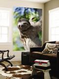 Sloth Living in Parque Centenario Vægplakat af Margie Politzer