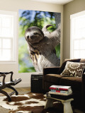 Sloth Living in Parque Centenario Wall Mural by Margie Politzer
