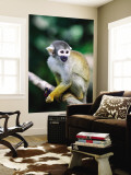 Squirrel Monkey (Saimiri Sciureus) About to Eat a Colourful Butterfly at an Animal Rescue Centre Mural por Paul Kennedy