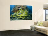 Schooling Sweetlip Fish Swim Past Coral Reef, Raja Ampat, Indonesia Wall Mural by  Jones-Shimlock