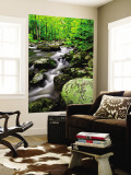 Creek Flows Through Forest, Shenandoah National Park, Virginia, USA Wall Mural by Jay O'brien