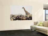 A Lone Giraffe Stands Tall at a Waterhole, Etosha National Park, Namibia, Africa Wall Mural by Wendy Kaveney