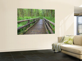 Maple Glade Trail Wooden Bridge, Quinault Rain Forest, Olympic National Park, Washington, USA Wall Mural by Jamie & Judy Wild