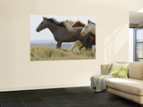 Wild Horses Running, Carbon County, Wyoming, USA Reproduction murale géante par Cathy & Gordon Illg