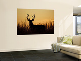 White-Tailed Deer in Grassland, Texas, USA Wall Mural by Larry Ditto