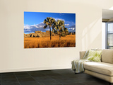 Landscape in Late Afternoon Light Wall Mural by Olivier Cirendini
