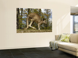 Eastern Grey Kangaroo at Queensland, Australia Wall Mural by Pete Oxford