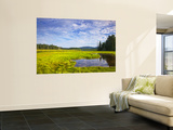 Bass Harbor Marsh in Acadia National Park, Maine, USA Wall Mural by Chuck Haney