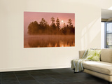 Sunrise on a Lake, Adirondack Park, New York, USA Wall Mural by Jay O'brien