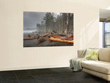 Beached Trees From Ocean Storms, Rialto Beach, Olympic National Park, Washington, USA Wall Mural by Jamie & Judy Wild