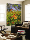 Firewheels Growing in Mesquite Trees, Texas, USA, Wall Mural by Larry Ditto