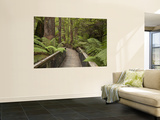 Footpath Through Forest To Newdegate Cave, Hastings Caves State Reserve, Tasmania, Australia Wall Mural by David Wall