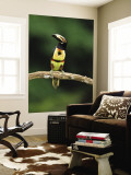 Collared Aracari Perched on Branch, Costa Rica Wall Mural by Joe & Mary Ann McDonald
