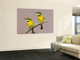Two Little Bee-Eater Birds on Limb, Kenya Wall Mural by Joanne Williams