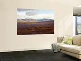 Wyoming Hills Across Tundra in Denali National Park and Preserve, Alaska, USA Wall Mural by Bernard Friel
