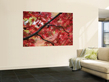 Maple Tree in Autumn Colours, Arishiyama District Wall Mural by Gerard Walker