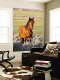 Feral Horse in the High Sagebrush Country East of Cody, Wyoming, USA Reproduction murale géante par Larry Ditto