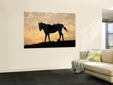 Sunrise and Silhouette of Horse and Rider on the Giza Plateau, Cairo, Egypt Wall Mural by Darrell Gulin