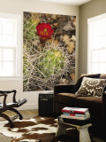 Claret Cup Cactus in Bloom Wall Mural by John Elk III