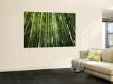 Bamboo Forest, Arashiyama-Sagano District Wall Mural by Greg Elms