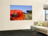 Summer Poppies in Tuscany, Italy Wall Mural by Terry Eggers
