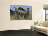 Common Zebra, Masai Mara National Reserve, Kenya Wall Mural by Sergio Pitamitz