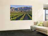 Cabernet Sauvignon Vines in Huailai Rongchen Vineyard, Hebei Province, China Wall Mural by Janis Miglavs