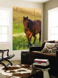 Horse in Pasture Near Pullman, Washington, USA Wall Mural by Chuck Haney