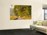 Country Road, Great Smoky Mountains National Park, Cades Cove, Tennessee, USA Wall Mural by Adam Jones