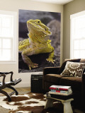Bearded Dragon Wall Mural by Adam Jones