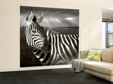 Black & White of Zebra and Plain, Kenya Wall Mural – Large by Joanne Williams