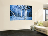 White Trees and Snow at Mount Moiwa Lookout Wall Mural by Shayne Hill