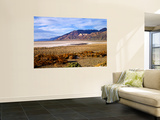 Mesquite and the Black Mountains of the Amaragosa Range, Death Valley National Park, CA Wall Mural by Bernard Friel