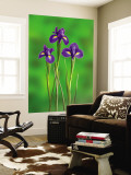 Iris Flowers Wall Mural by Adam Jones