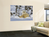 Polar Bear Cub Playing With a Watchful Mother, Wapusk National Park, Manitoba, Canada Wall Mural by Cathy & Gordon Illg