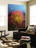 Two Varieties of Feather Star Crinoids, Pisang Islands, Papua, Indonesia Mural Premium por  Jones-Shimlock