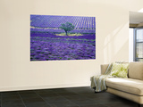 Lavender Fields, Vence, Provence, France Wall Mural by Gavriel Jecan