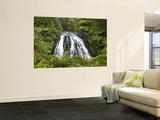 Owharoa Falls, Karangahake Gorge, Waikato, North Island, New Zealand Wandgemälde von David Wall