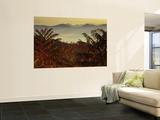 Sumac at Sunrise in the Mountains, Tennessee, USA Wall Mural by Joanne Wells