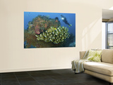 Diver and Schooling Sweetlip Fish Next To Reef, Raja Ampat, Papua, Indonesia Mural Premium por  Jones-Shimlock