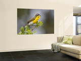 Yellow-Breasted Chat Singing on Breeding Territory, Central Texas, USA Wall Mural by Larry Ditto