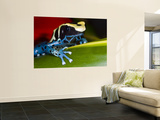 Poison Dart Frog on Red Leaf, Republic of Surinam Wall Mural by Jim Zuckerman