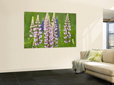 Field of Blooming Lupine Flowers and Bee, Acadia National Park, Maine, USA Wall Mural by Nancy Rotenberg