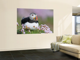 Atlantic Puffin and Sea Pink Flowers, Saltee Island, Ireland Wall Mural by Art Morris