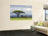 Maasai Giraffe (Giraffa Camelopardalis Tippelskirchi) Wandgemälde von Ariadne Van Zandbergen