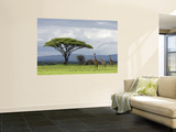 Maasai Giraffe (Giraffa Camelopardalis Tippelskirchi) Wall Mural by Ariadne Van Zandbergen