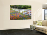 Texas Bluebonnets and Paintbrush Along White Fence Line, Texas, USA Wall Mural by Julie Eggers